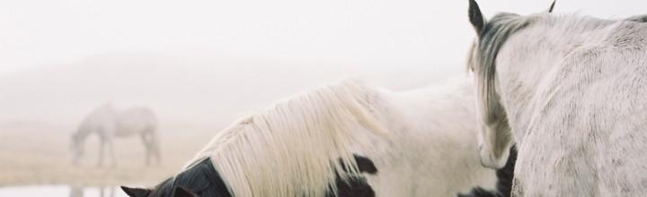 Wild Horses (Hearth Magazine)